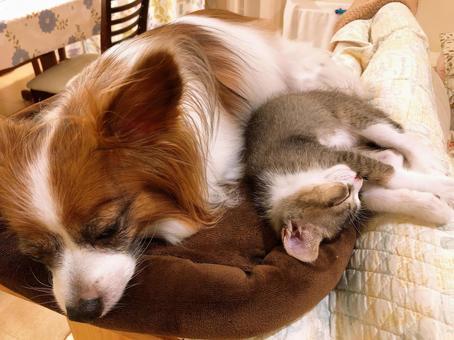 ダニコロリは犬や猫などペットがいても使えるの!?悪影響はない?