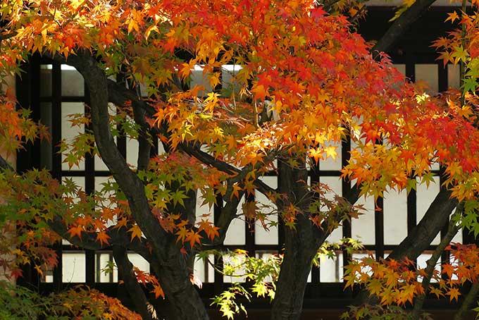 秋でもダニコロリは有効?暑さも落ち着いてくる秋にダニコロリを使ってみた結果